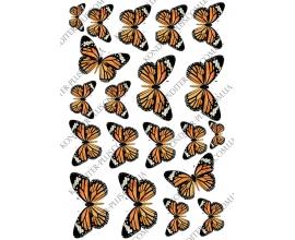 бабочки тигровые